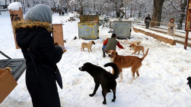 Yalovada yabani hayvanlar için doğaya tonlarca yem bırakıldı
