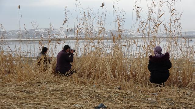 Van Gölü, Sibiryadan gelen ötücü kuğuları ağırlamaya başladı