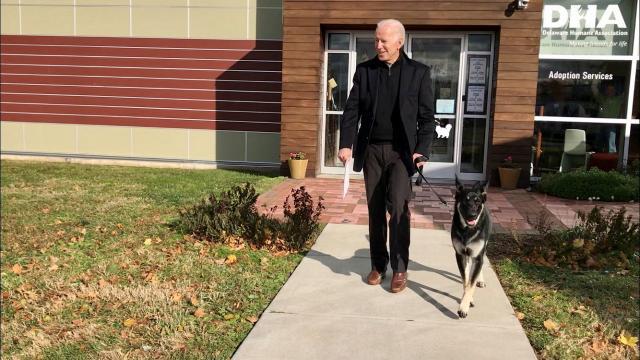 Joe Bidenın köpeği Major, Beyaz Sarayı birbirine kattı