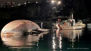 Ölü balina kıyıya vurdu: 70 ton ağırlığında