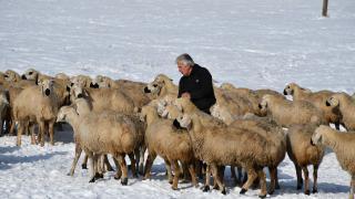 50 yıl sonra döndüğü köyünde hayvancılıkla uğraşıyor