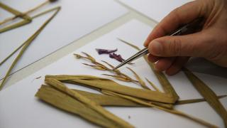 Bolu'da yeni bir bitki türü bulundu: Aladağ kılıçotu