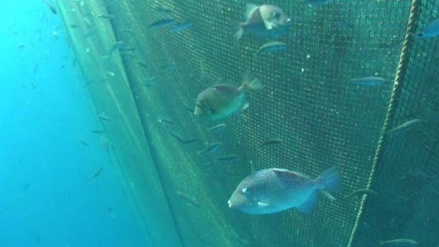 TÜBİTAK projesinde 39 farklı deniz canlısı görüntülendi
