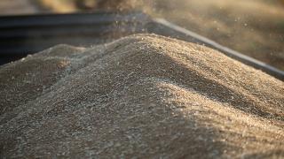 Rusya'da buğday ihracat vergisine iki kat artış