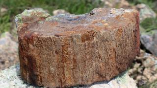 Akademisyenler 2 yeni ağaç türü keşfetti
