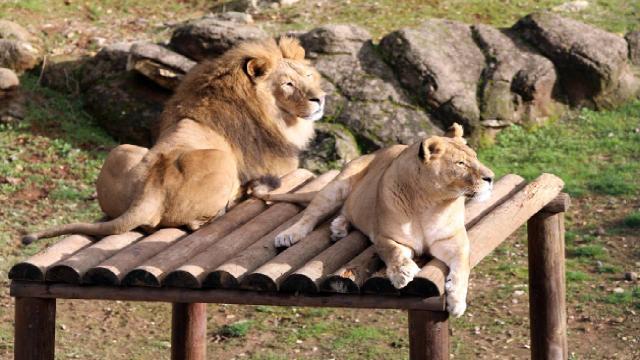 Türkiyenin en büyük hayvanat bahçesi 5 milyon ziyaretçi bekliyor