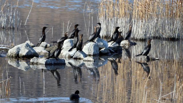 Ağrı Dağının etekleri göçmen kuşlara ev sahipliği yapıyor