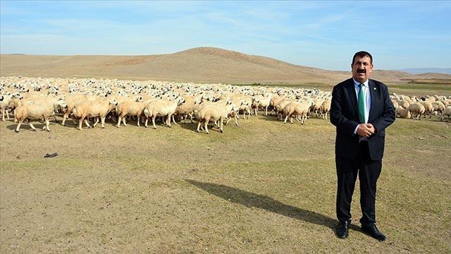 TÜDKİYEB Genel Başkanı Çelik: Keçi varlığını artırma hızında Türkiye 5. sırada