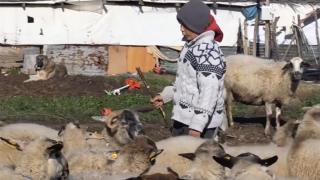 Çoban Şevki sosyal medyada viral oldu