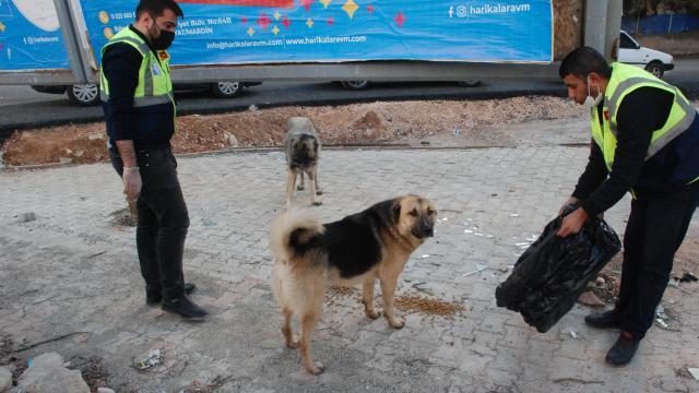 Midyat Belediyesi kısıtlamada sokak hayvanlarını unutmadı