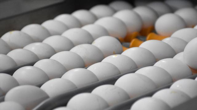 Afyonkarahisardan 32,6 milyon dolarlık yumurta ihracatı