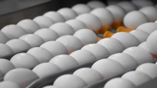 Afyonkarahisar'dan 32,6 milyon dolarlık yumurta ihracatı