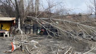 Karabük'te 'fırtına' ağacı yerinden söktü