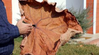 Adıyaman'da yeni bitki türü keşfedildi: Tel Işkını