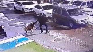 Bitlis'te köpek saldırısı kamerada