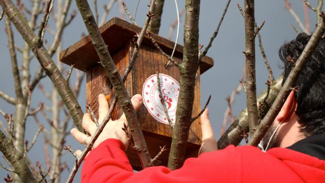 Düzcede genç gönüllüler kuşlar için yuva yaptı