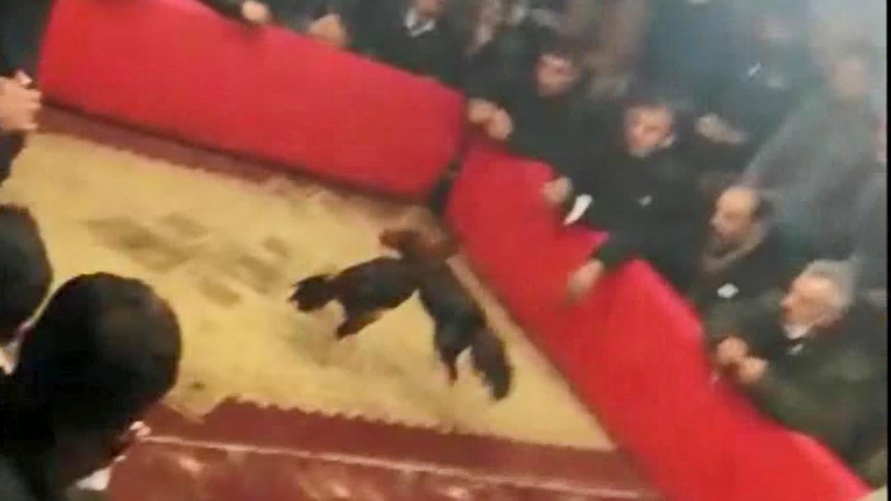 Şanlıurfa'da horoz dövüşü baskını: 105 bin lira ceza