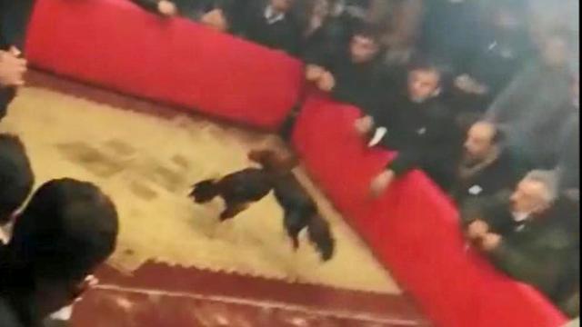 Şanlıurfada horoz dövüşü baskını: Organize eden kişiye 105 bin lira ceza