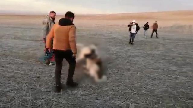 Konyada köpek dövüştüren 5 kişiye para cezası