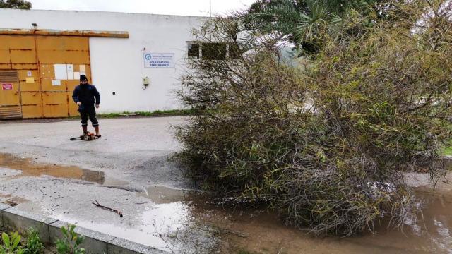 Muğlada kuvvetli rüzgar bazı ağaçları ve elektrik direklerini devirdi