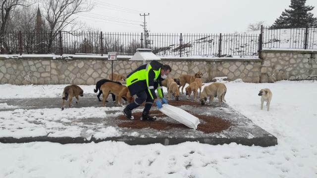 Kütahyada sokak hayvanları unutulmadı