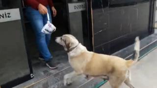 Aç kalan sokak köpeği börekçiden yiyecek aldı