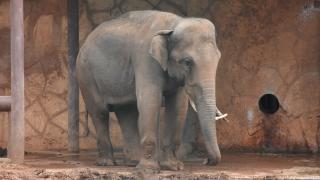 Fil kaçak avcıyı ezerek öldürdü