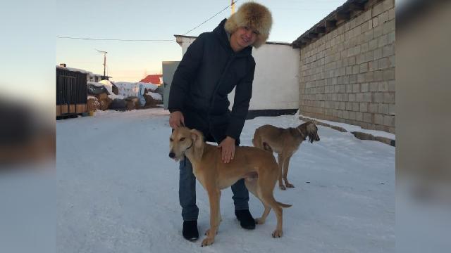 Kazakistanın av köpeği: Kumay Taz