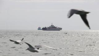 Marmara'da oksijen azalıyor: Daha az balık olabilir