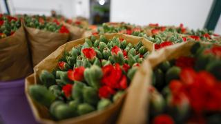 Pandemide Türkiye'nin çiçek ihracatı arttı