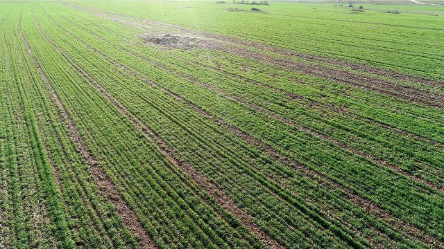 Kar yağışı buğdaya can suyu oldu