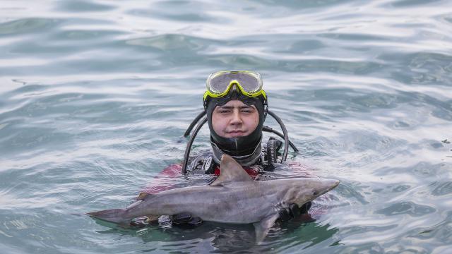 Mersinde denizde telef olmuş köpek balığı yavrusu bulundu