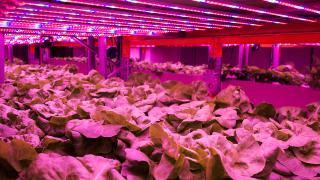 Ekonomik ve ekolojik tarım modeli: Akuaponik
