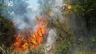 Muğla'da askeri alanda orman yangını