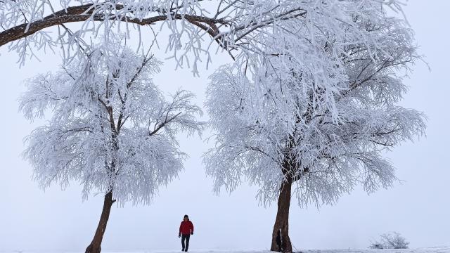 Bitlis'te kırağı tutan ağaçlar beyaza büründü