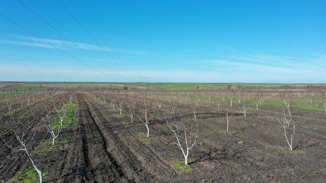 Edirnede üretime açılan hazine arazileri çiftçiye ek gelir kapısı oldu