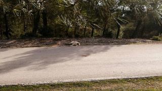 Sakarya'da 8 köpeğin zehirlendiği iddiası