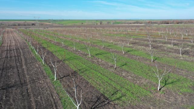Üretime açılan hazine arazileri çiftçiye ek gelir kapısı oldu