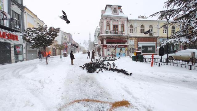 Soğuk havanın etkili olduğu Edirnede sokak hayvanları unutulmadı