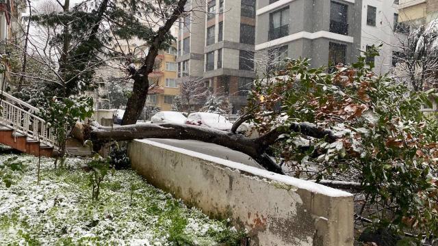 Kadıköyde otomobillerin üzerine ağaç devrildi