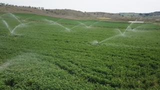 Edirne Ovası'ndaki sulama projesi ile ekonomiye yılda 20 milyon lira katkı
