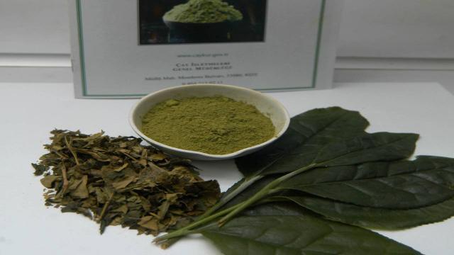 Çaykur, ABDye yeşil çay pudrası ihraç edecek