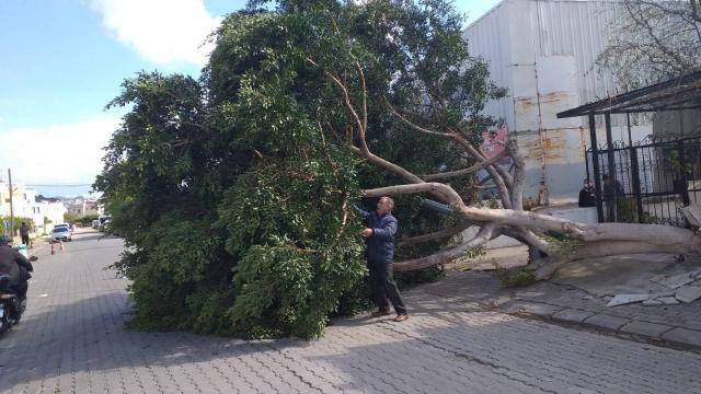 Muğlada kuvvetli fırtına nedeniyle ağaçlar devrildi