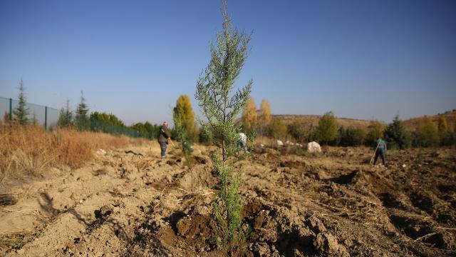 TEMA Vakfı sağlık çalışanları için hatıra ormanı oluşturdu