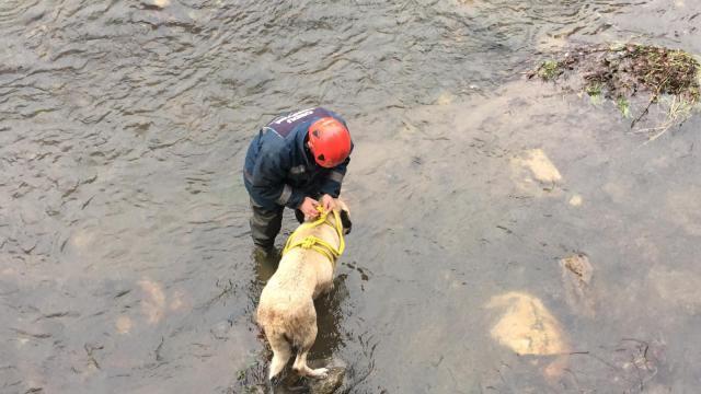 Orduda çaya düşen köpeği itfaiye ekipleri kurtardı