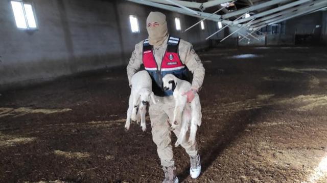 Ağıl çöktü, 700 koyunu jandarma kurtardı
