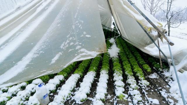 Bursadaki bazı seralar kar kütlelerinin ağırlığına dayanamayıp çöktü