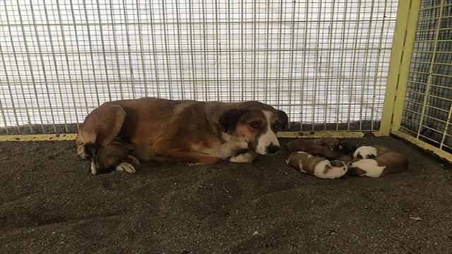 Donmak üzereyken bulunan köpek ve yavruları korumaya alındı