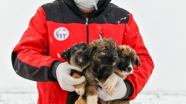 Bursada yavru köpekler donmaktan kurtarıldı