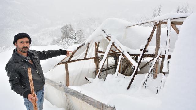 """Kastamonuda """"kar"""" çileye dönüştü: Elektrik, su kesildi, seralar çöktü"""